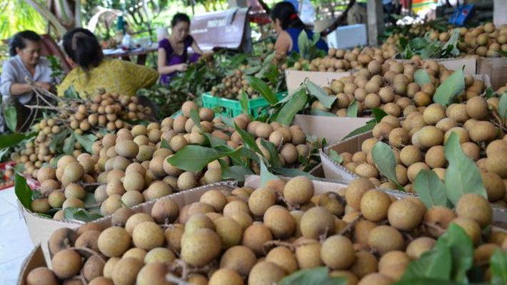Trung Quốc chiếm 98% tổng kim ngạch xuất khẩu nhãn Việt