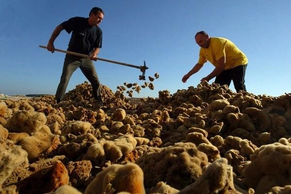 """Số lượng bọt biển khổng lồ tạo ra ngành nghề """"kiếm bộn"""" ở châu Âu"""