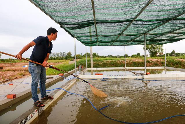 Anh Nguyễn Trung Hiếu chủ trang trại cá lăng giống ở huyện Củ Chi, TPHCM.