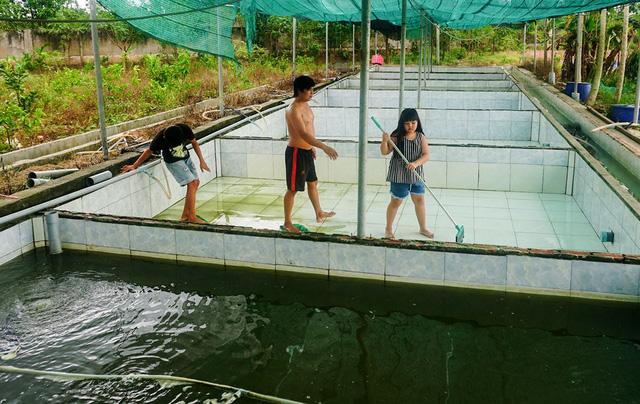 Sau những lần thất bại, điều khiến anh Hiếu quan tâm nhất là nước sạch, thức ăn sạch, ao sạch để cá có điều kiện phát triển tốt.