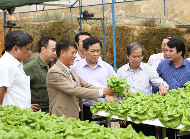 Phó Thủ tướng thăm mô hình trồng rau sạch của một HTX tại Đà Lạt