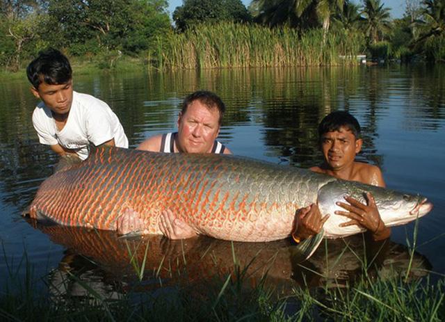Cá hải tượng được mệnh danh là quái vật sông Amazon.