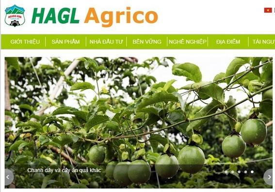 Em trai bầu Đức bất ngờ từ nhiệm tại HAGL Agrico