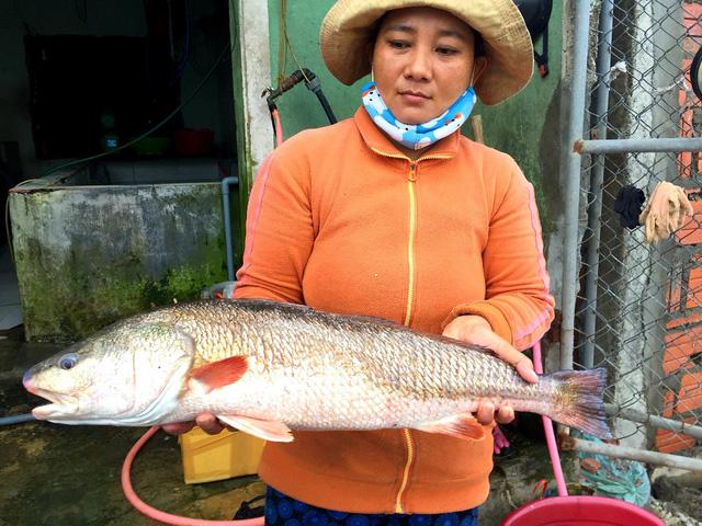 Mua được cá lớn có vảy vàng, nghi cá sủ vàng quý hiếm