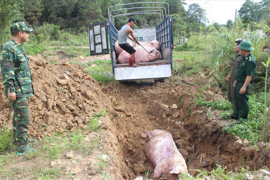 Trung Quốc bùng phát dịch tả lợn, Thủ tướng yêu cầu siết chặt cửa khẩu