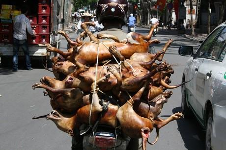 Thịt chó là món khoái khẩu của nhiều người dân