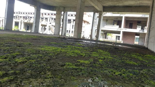 Rêu lên xanh tầng mái bê tông bỏ hoang nhiều năm