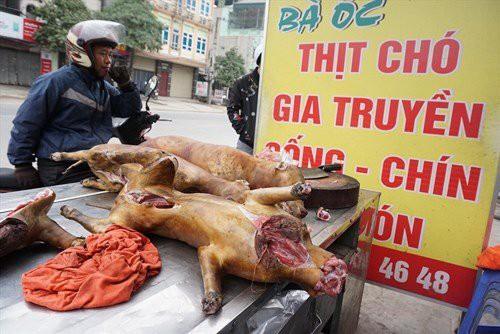 Năm 2021 nội thành Hà Nội sẽ không kinh doanh thịt chó, mèo.