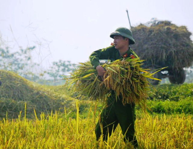 Thanh Hóa yêu cầu huy động lực lượng lao động, phương tiện máy móc khẩn trương thu hoạch lúa mùa khi ruộng lúa chín 80-85% và hỗ trợ nhân dân, đấu nối với các cơ sở sấy để sấy thóc kịp thời, đảm bảo chất lượng