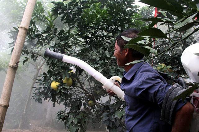 Dùng bình phun vôi lên quả để trừ muỗi, các loại sâu có hại cho quả.
