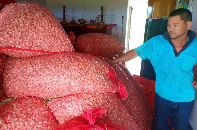 Tỏi được mùa nhưng giá thấp nên người dân Khánh Hòa trữ lại chờ giá lên nhưng giá vẫn không lên và tồn đọng hàng trăm tấn