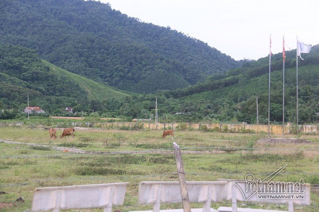 Dự án tiền tỷ ở Cầu Treo biến thành điểm chăn thả trâu bò