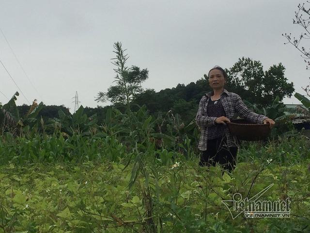 Bà Hải canh tác trồng hoa màu tạm bợ trên nền đất khu CN Đại Kim
