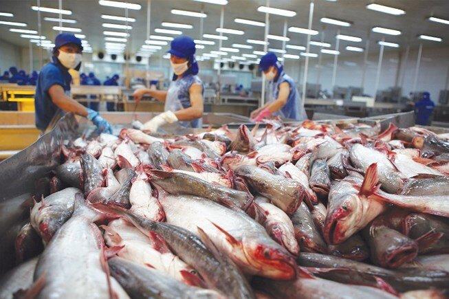 """Xuất khẩu cá tra """"thắng lớn"""": Doanh nghiệp dần"""