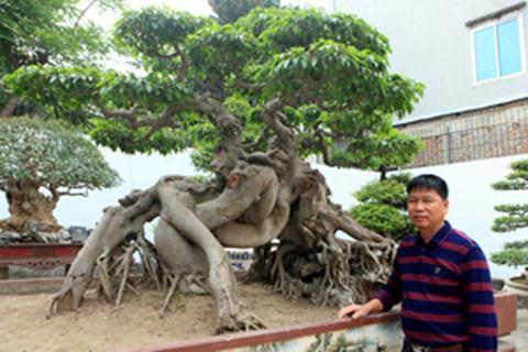 Chân dung Toàn đô la bên cây Ngọa hổ tàng long.