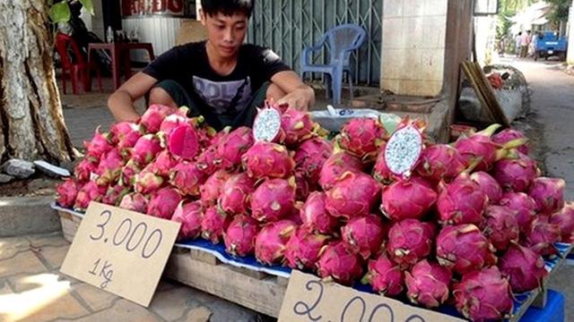 TQ cũng vào vụ thu hoạch thanh long với sản lượng lớn, giảm nhập nên thanh long Việt Nam bị dội hàng, giá rẻ như cho.