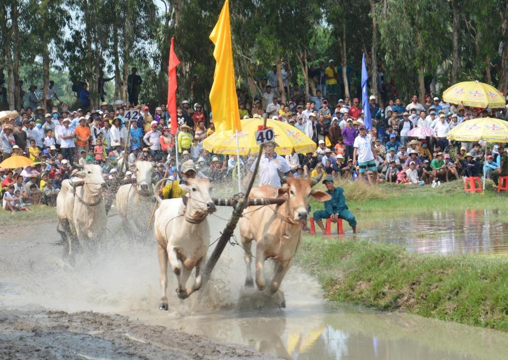 Number 1 đồng hành cùng hội đua bò Bảy Núi tranh Cúp Truyền hình An Giang lần thứ 25
