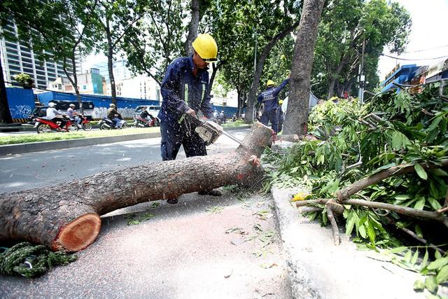 Đốn hạ cây xanh trên đường Tôn Đức Thắng phục vụ dự án cầu Thủ Thiêm 2 (ảnh: Nguyễn Quang)