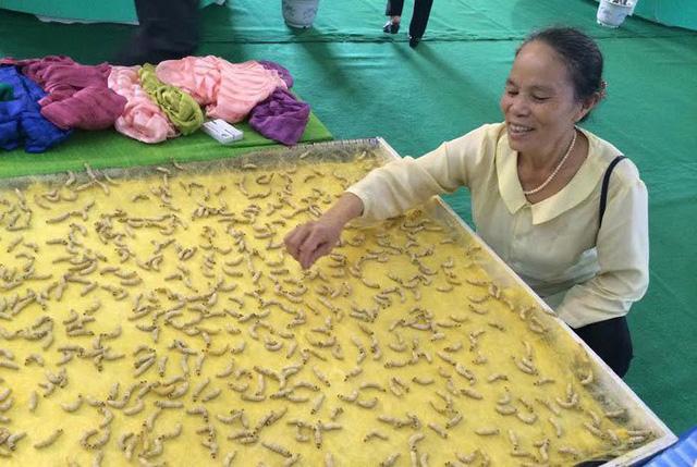 Bà Thuận là người đầu tiên huấn luyện hàng vạn con tằm tự dệt chăn tơ