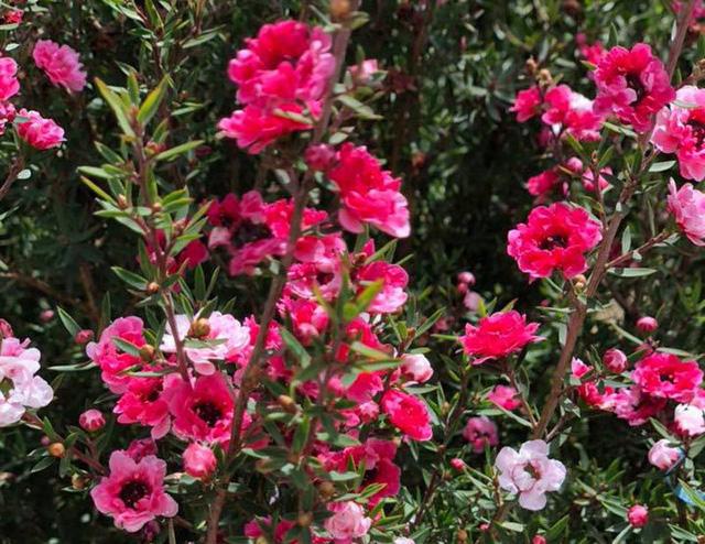 Bỏ 500 triệu đồng mua trăm bụi cây dại, hoa nhỏ li ti trồng khắp vườn nhà