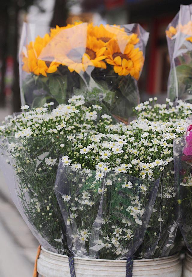 Những bông cúc họa mi đầu mùa thường có cảnh nhỏ, tròn và thưa hơn so với cúc họa mi ở chính vụ.