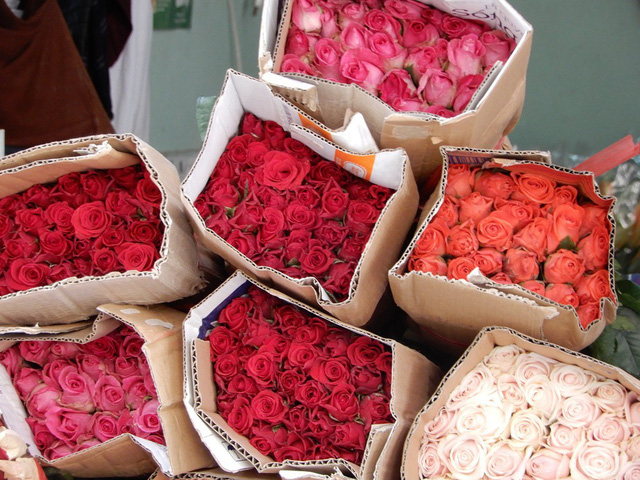 Dịp này, giá các loại hoa đều tăng, trong đó hoa hồng tăng gấp 3 lần
