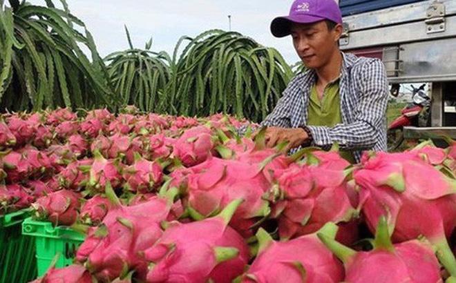 Trung Quốc siết nhập, trái cây Việt rớt giá thảm