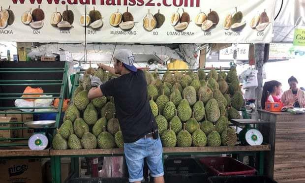 Sầu riêng các nước Đông Nam Á đang hướng tới thị trường Trung Quốc