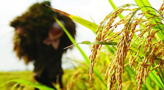 Các hiệp định thương mại tự do được kí kết sẽ là cơ hội cho nông sản Việt Nam