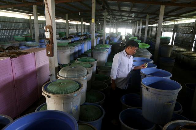 Nhiều năm nay, anh Lê Thanh Tùng (39 tuổi) ngụ xã Tân Phú Trung, huyện Củ Chi, TPHCM là địa điểm cung cấp dế giống và thực phẩm cho khu vực miền Nam.