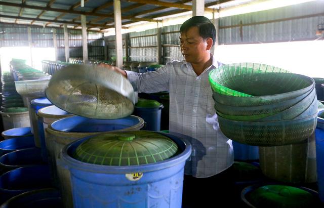 Trang trại của anh Tùng rộng 400m2 với khoảng 1.000 xô nhựa nuôi dế.