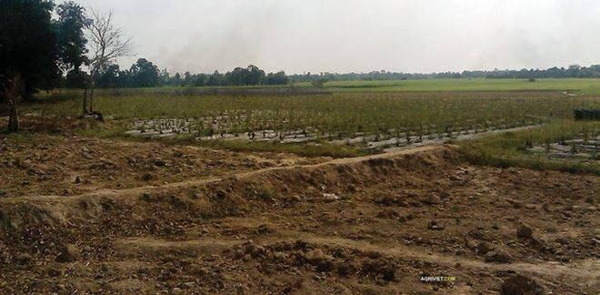 Bắc Ninh xin chuyển mục đích sử dụng gần 81 ha đất trồng lúa để thực hiện dự án BT