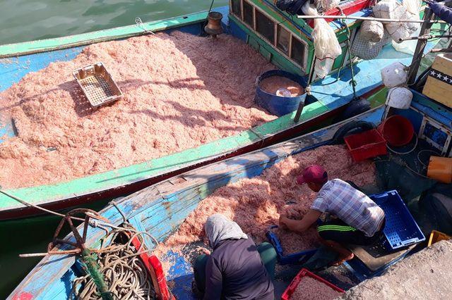 """Ngư dân Bình Định trúng lớn """"lộc biển"""", kiếm tiền triệu chỉ vài giờ - 1"""