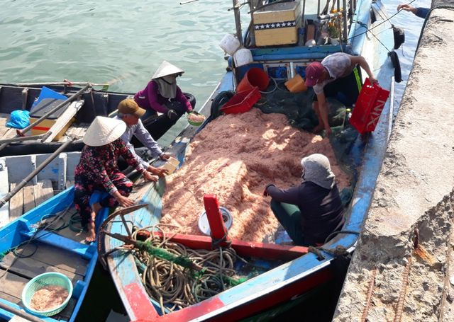 """Ngư dân Bình Định trúng lớn """"lộc biển"""", kiếm tiền triệu chỉ vài giờ - 2"""