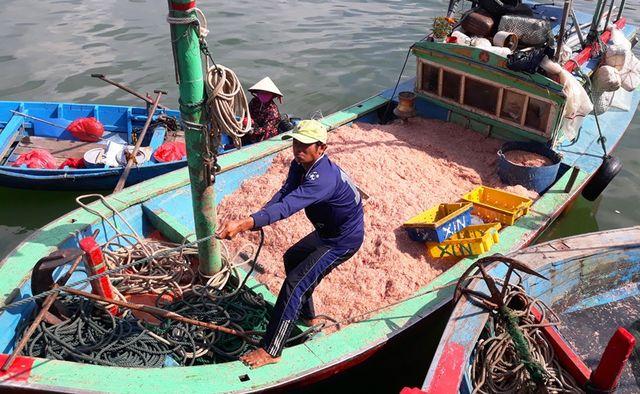 """Ngư dân Bình Định trúng lớn """"lộc biển"""", kiếm tiền triệu chỉ vài giờ - 4"""