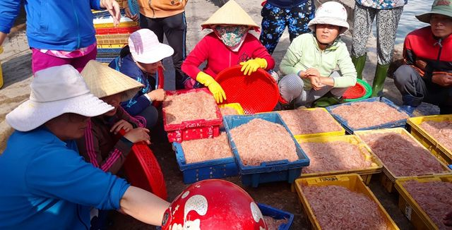 """Ngư dân Bình Định trúng lớn """"lộc biển"""", kiếm tiền triệu chỉ vài giờ - 7"""