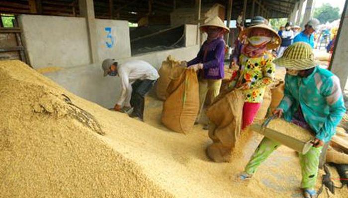 Cứu giá lúa giảm, Thủ tướng yêu cầu mua sớm 200.000 tấn gạo dự trữ