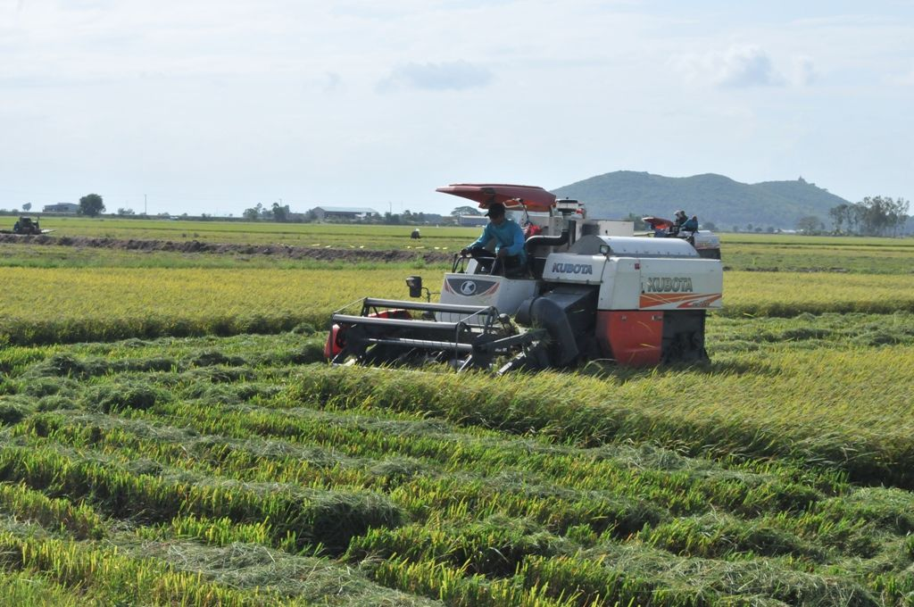 Giá lúa giảm, nhiều tỉnh miền Tây kêu gọi DN mua lúa cho nông dân