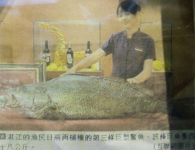 """""""Soi"""" những con cá đắt nhất thế giới, cá ngừ đứng đầu giá 71 tỷ/ con - 6"""