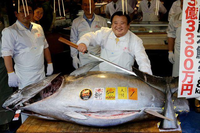 """""""Soi"""" những con cá đắt nhất thế giới, cá ngừ đứng đầu giá 71 tỷ/ con - 7"""