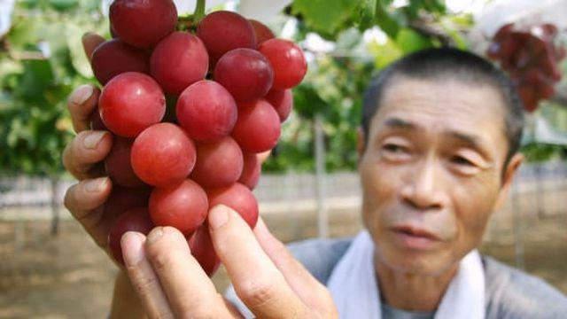 Vì sao người Nhật bỏ 635 triệu đồng mua một cặp dưa lưới, 105 triệu đồng/quả dâu tây? - 3