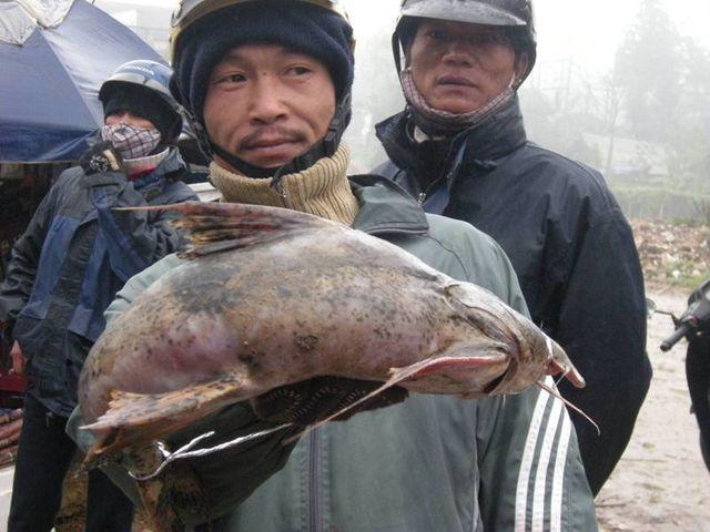 """tú """"dọc"""" dạc sản cá cục hiem o mien nui, co tien cung kho mua hinh anh 2"""