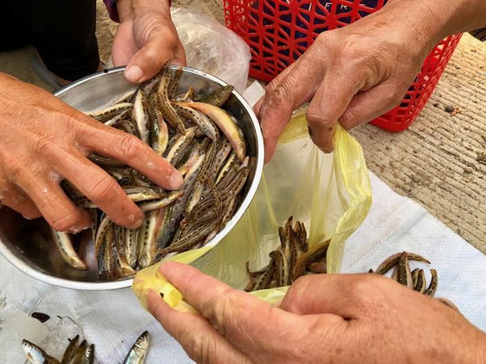 """tú """"dọc"""" dạc sản cá cục hiem o mien nui, co tien cung kho mua hinh anh 9"""