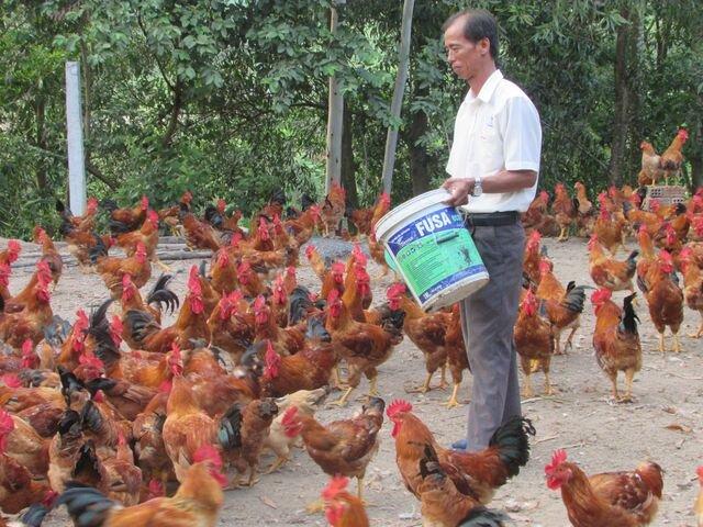 Bỏ nghề tài xế về nuôi gà, thu lãi 150 triệu đồng/năm