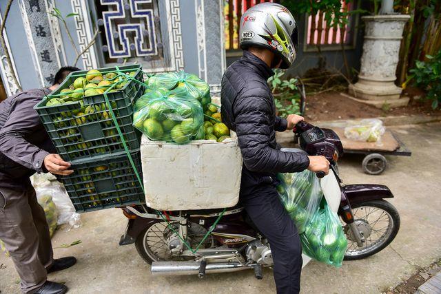 Dân Thủ đô giải cứu quýt sạch cho nông dân Nghệ An - 12
