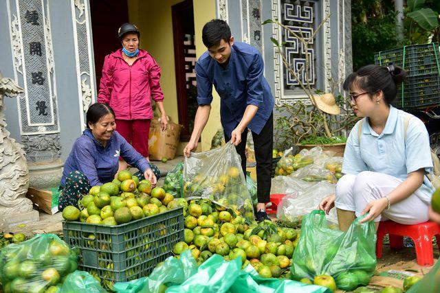 Dân Thủ đô giải cứu quýt sạch cho nông dân Nghệ An - 8