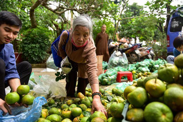 Dân Thủ đô giải cứu quýt sạch cho nông dân Nghệ An - 9