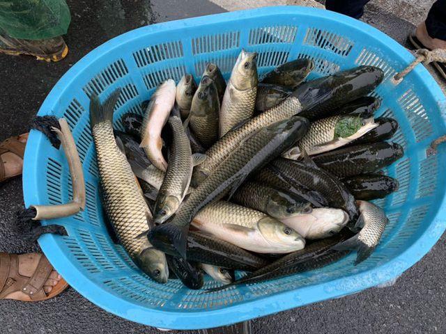 Khu dân cư đại gia: Mấy trăm triệu mua 2 tấn cá phóng sinh xuống hồ - 3