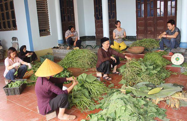 Cặp vợ chồng 20 năm giữa đảo hoang, mỗi ngày 2 tạ rau bí bán khắp Hà Nội - 4