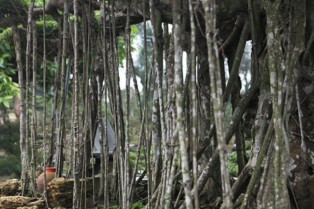 Dành cả thanh xuân tạo tác cây sanh cổ, kết quả thu được khiến ai cũng mê - 11